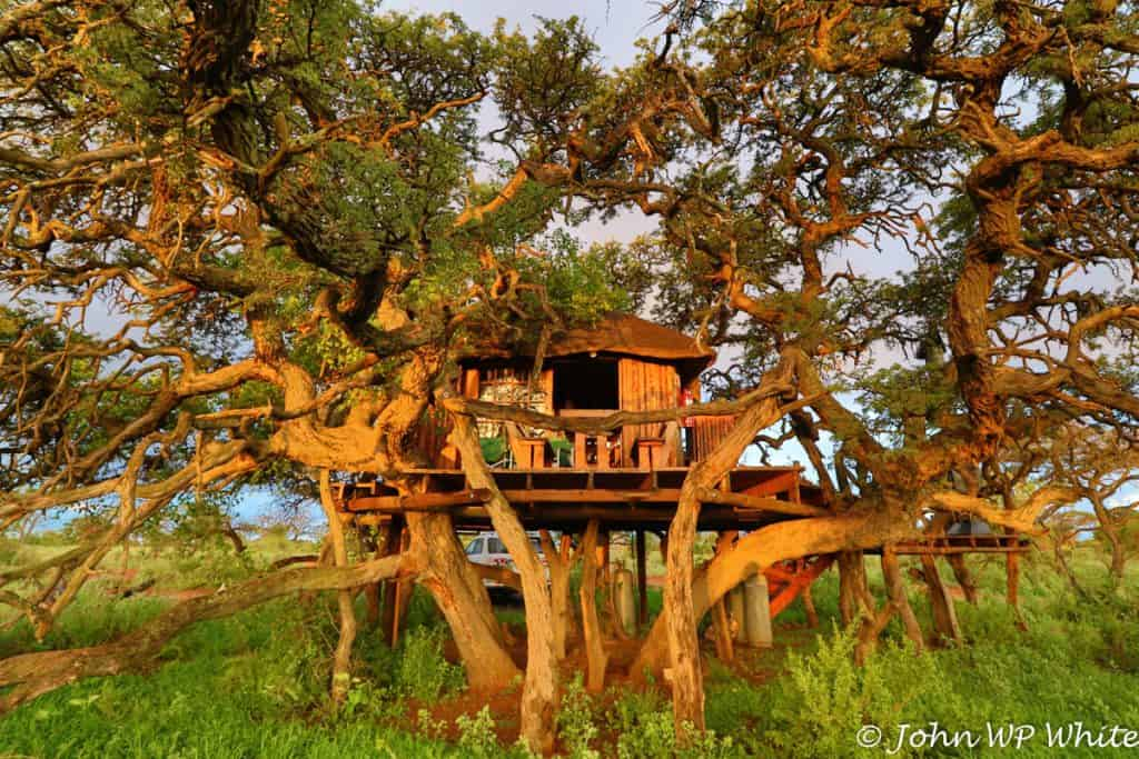 Kameeldoring Treehouse