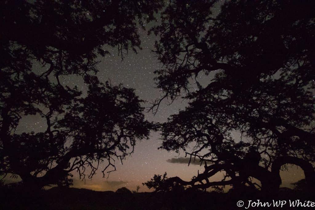 Night Sky at Kameeldoring Treehouse